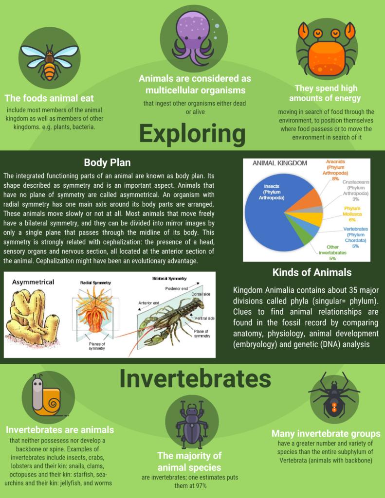 exploring invertebrates