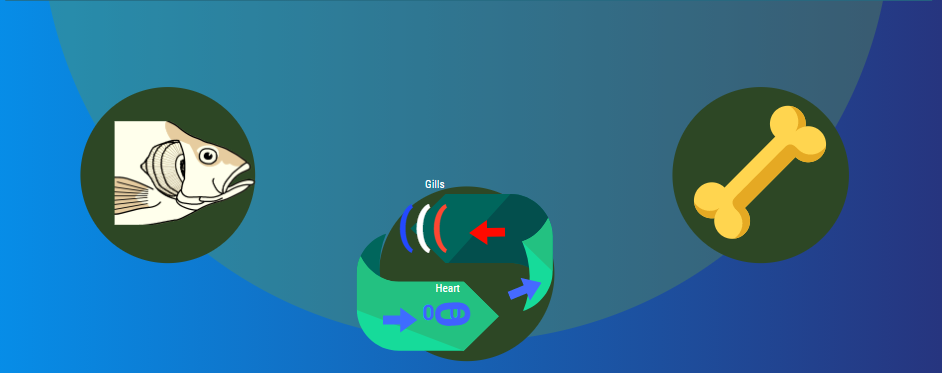 Fish function and structure