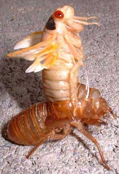 Insect Exoskeleton